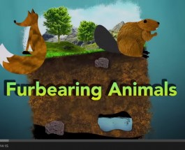 Furbearing-Animals-A-Renewable-Natural-Resource-YouTube